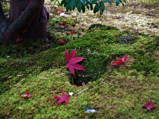 あじさい鍼灸マッサージ治療院 箱根美術館の庭園 紅葉と苔のコントラスト