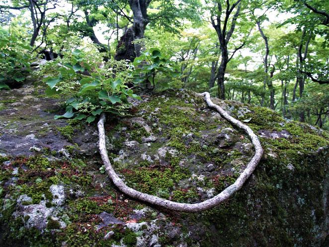 あじさい鍼灸マッサージ治療院 箱根美術館の庭園 自然が造る造形
