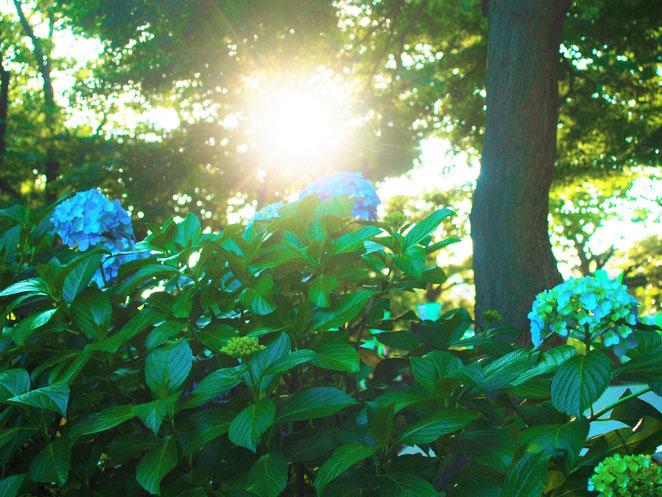 あじさい鍼灸マッサージ治療院 白山神社古墳 中は森のような雰囲気