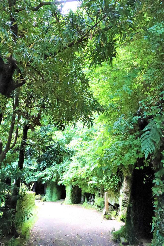 あじさい鍼灸マッサージ治療院 寿福寺のお墓