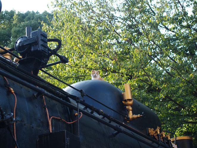 上野 蒸気機関車に乗る猫