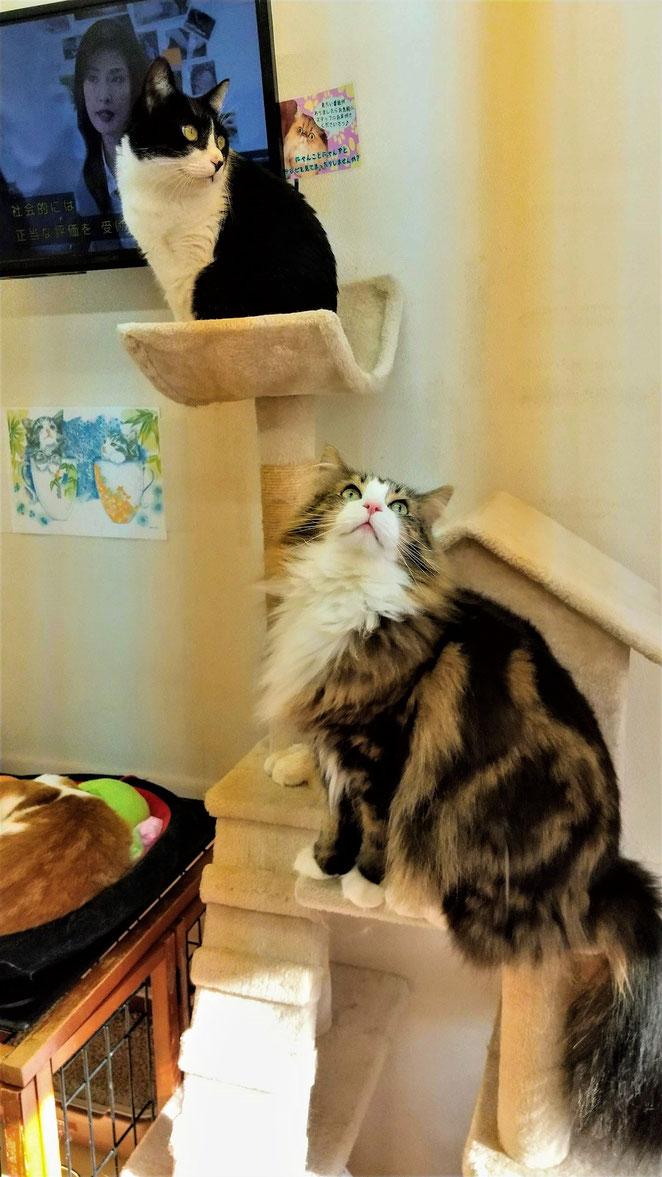 あじさい鍼灸マッサージ治療院 猫カフェ2匹