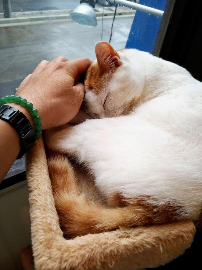 あじさい鍼灸マッサージ治療院院 猫が喜ぶ
