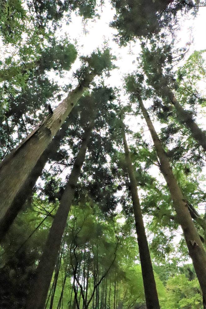 あじさい鍼灸マッサージ治療院 東慶寺の森
