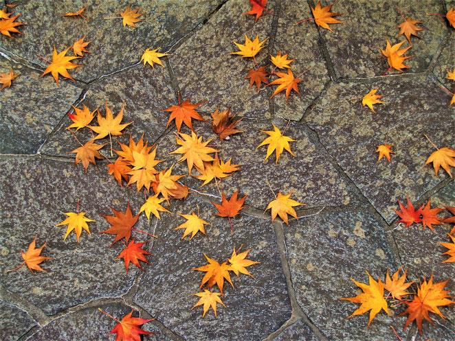 あじさい鍼灸マッサージ治療院 箱根美術館 石畳に落ちた紅葉の落ち葉