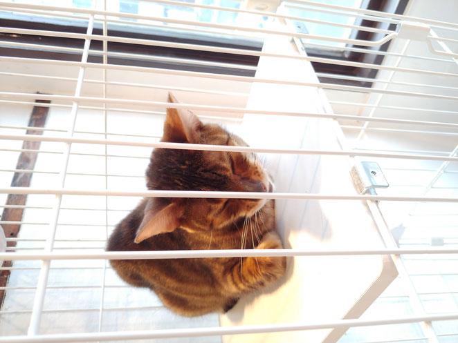 あじさい鍼灸マッサージ治療院 アネラカフェケージの猫