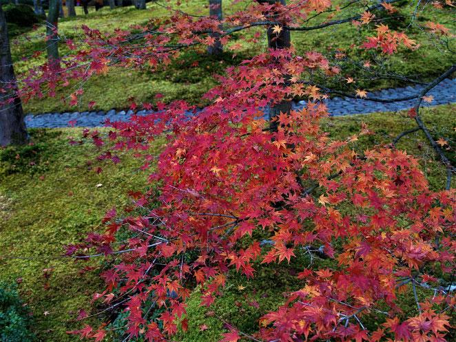あじさい鍼灸マッサージ治療院 箱根美術館の庭園 紅葉と苔