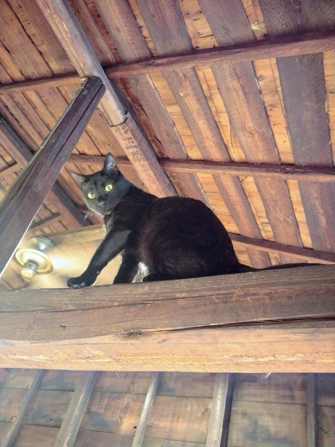 あじさい鍼灸マッサージ治療院 アネラカフェ梁にいる猫