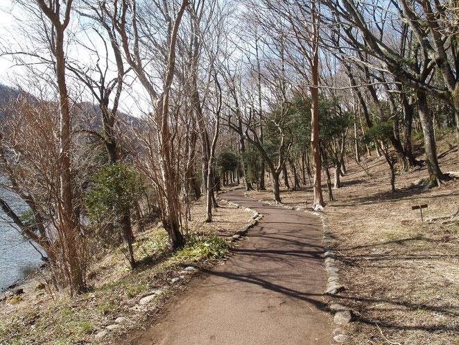 あじさい鍼灸マッサージ治療院 九頭龍神社本宮に向かうには芦ノ湖ほとりの遊歩道を歩いていきます