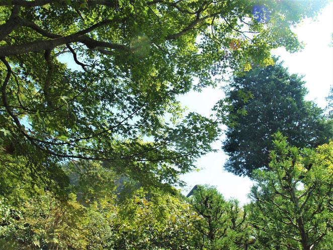 あじさい鍼灸マッサージ治療院 浄妙寺境内 森林