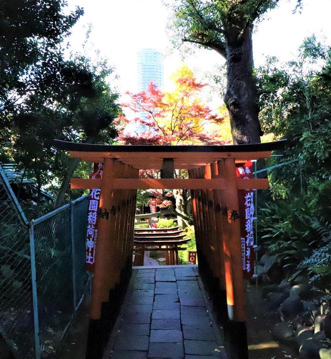 あじさい鍼灸マッサージ治療院 花園稲荷神社千本鳥居の途中