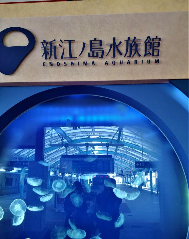 あじさい鍼灸マッサージ治療院 片瀬江ノ島駅構内のクラゲの水槽