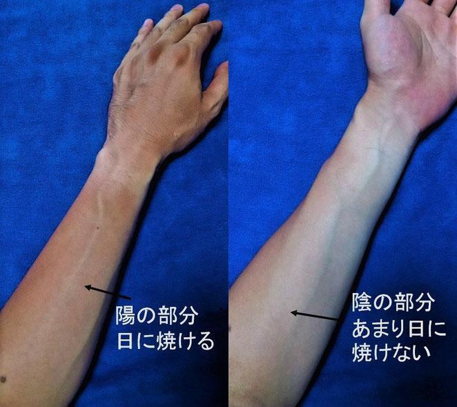 あじさい鍼灸マッサージ治療院 体表の陰陽