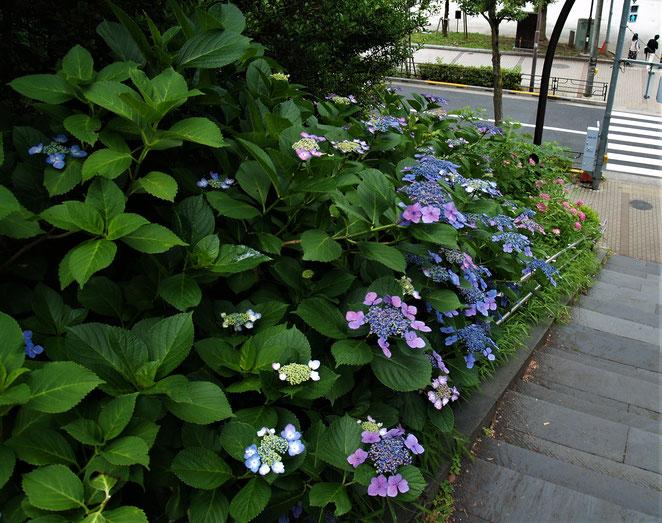 あじさい鍼灸マッサージ治療院 不忍池から上野恩賜公園への階段