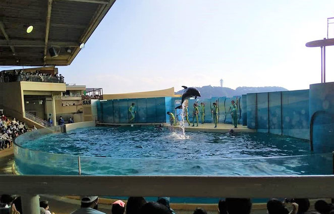 あじさい鍼灸マッサージ治療院 新江ノ島水族館のイルカショー