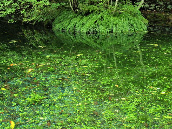 あじさい鍼灸マッサージ治療院 諏訪神社の池