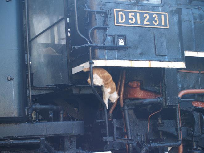 上野機関車から降りる猫