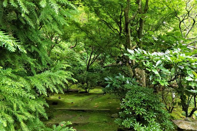 あじさい鍼灸マッサージ治療院 東慶寺境内緑