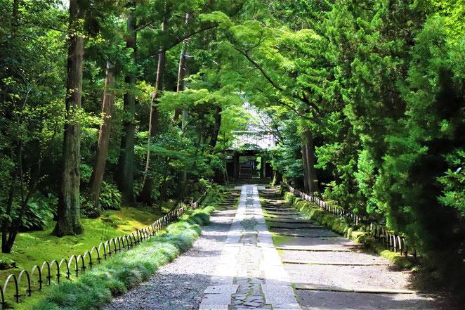 あじさい鍼灸マッサージ治療院 寿福寺の参道