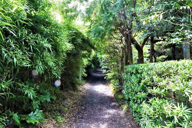 あじさい鍼灸マッサージ治療院 寿福寺の裏道