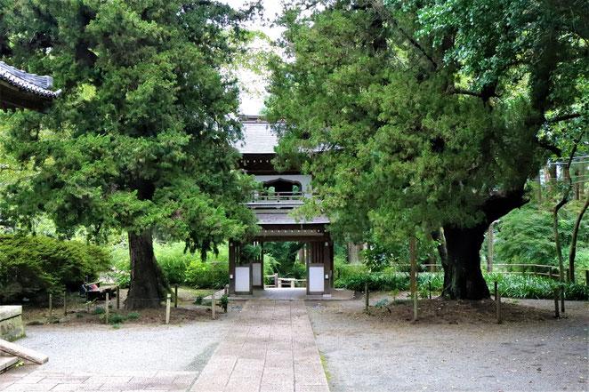 あじさい鍼灸マッサージ治療院 浄智寺の境内