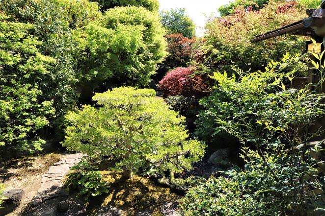 あじさい鍼灸マッサージ治療院 観智院の庭園中庭