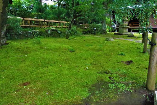 あじさい鍼灸マッサージ治療院 緑の苔