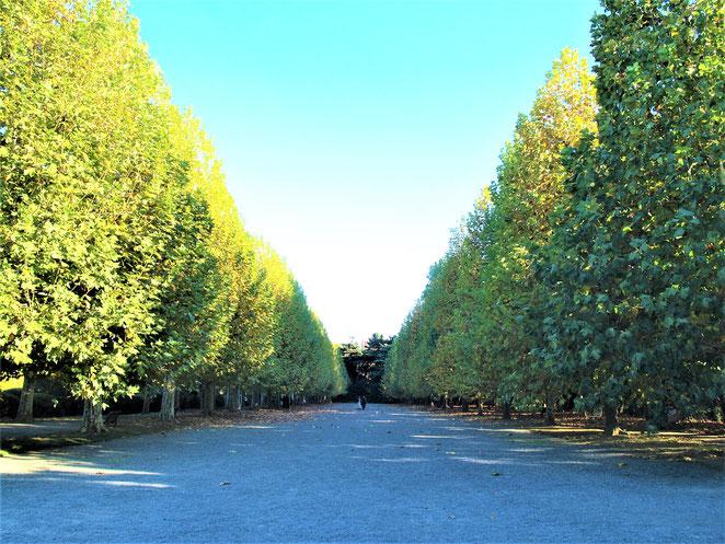 新宿御苑の整形式庭園