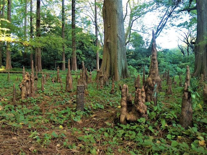新宿御苑の母と子の森