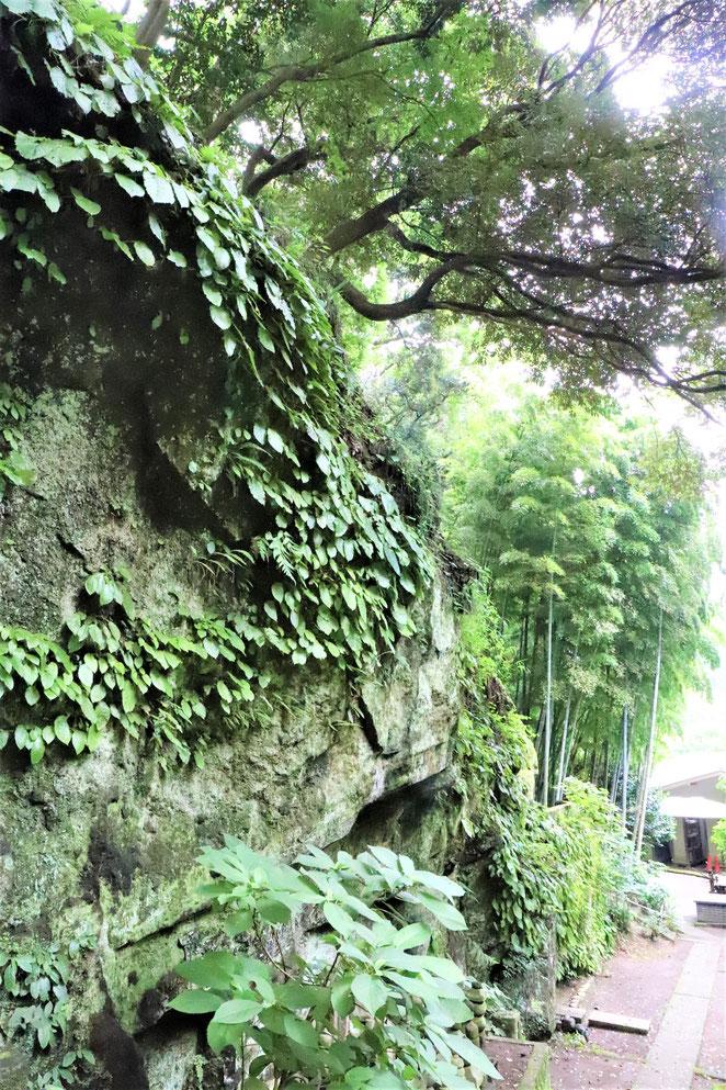 あじさい鍼灸マッサージ治療院 浄智寺境内の岩肌
