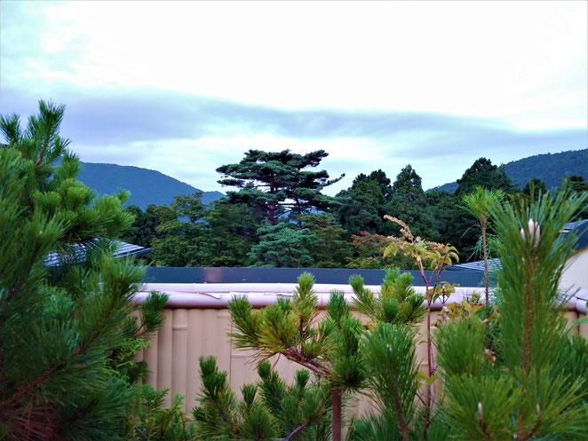 あじさい鍼灸マッサージ治療院 森の湯貸切露天風呂からの景色