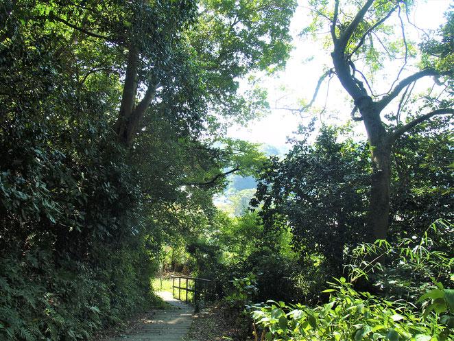 あじさい鍼灸マッサージ治療院 杉本寺境内の山道