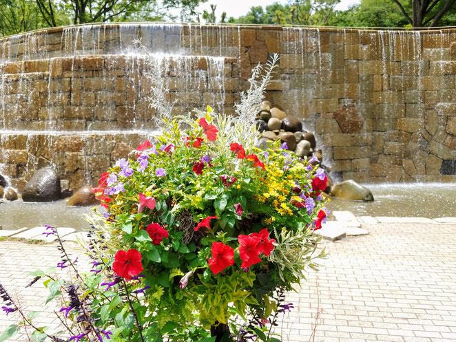 あじさい鍼灸マッサージ治療院 新宿中央公園のナイアガラの滝前の花