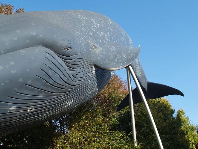 あじさい鍼灸マッサージ治療院 娘撮影 上野のクジラ