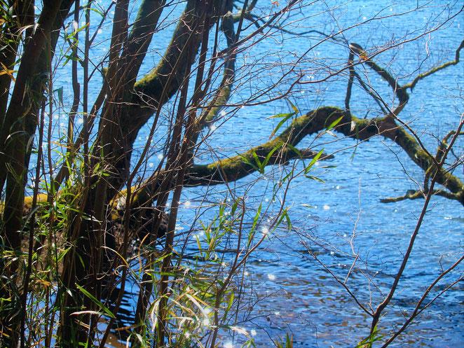 あじさい鍼灸マッサージ治療院 すぐそばに芦ノ湖湖面が迫っている