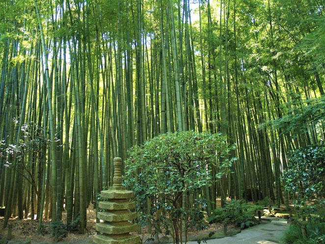 あじさい鍼灸マッサージ治療院 報国寺の竹林