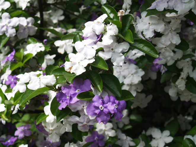 あじさい鍼灸マッサージ治療院 紫陽花