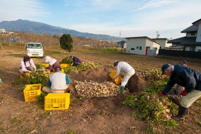 長野の郷土料理「おやき」も「山口大根」で。