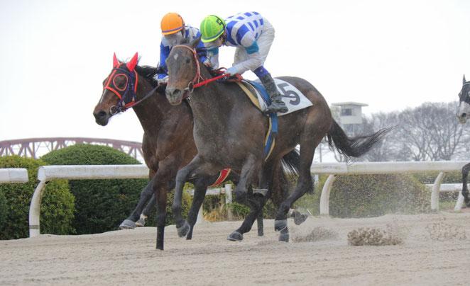 加藤幸保調教師の地方競馬通算900勝を達成した「チュウワファースト号」  鞍上は水野翔騎手