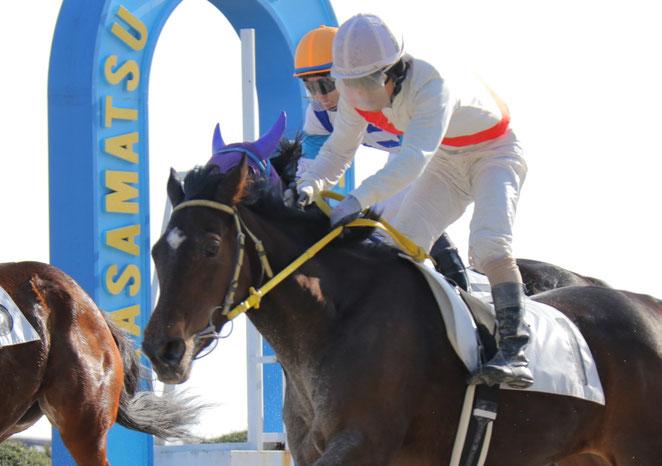 川嶋弘吉調教師の地方競馬通算2200勝を達成した「ピンクダイキリ号」 鞍上は山下雅之騎手