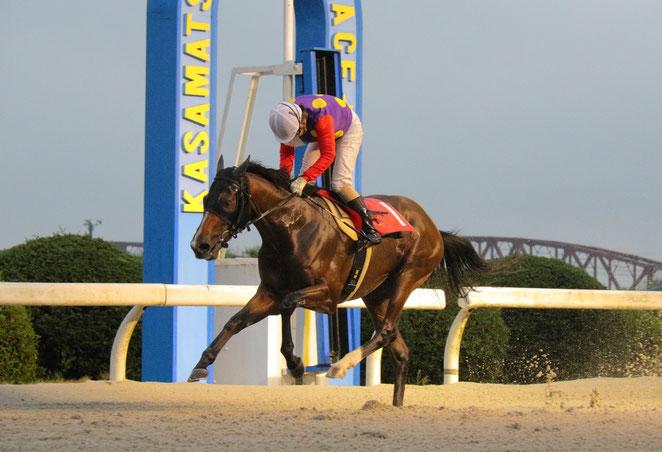 井上孝彦調教師の地方競馬通算1000勝を達成した「ライトスラッガー号」 鞍上は向山牧騎手
