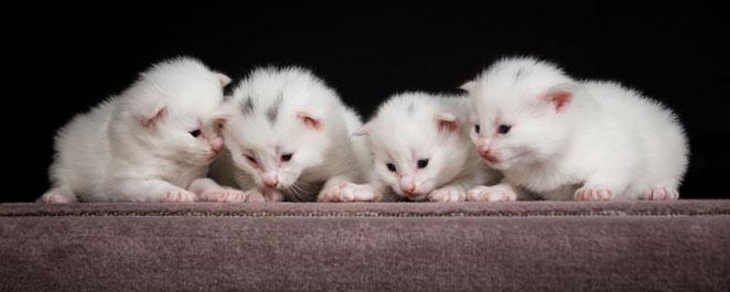 4 mâles blancs