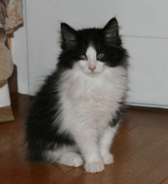 I'Figaro réservé