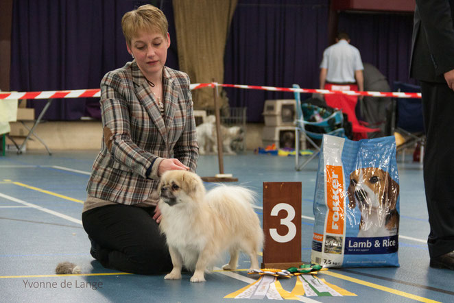 DERDE BEST IN SHOW BRISTOW