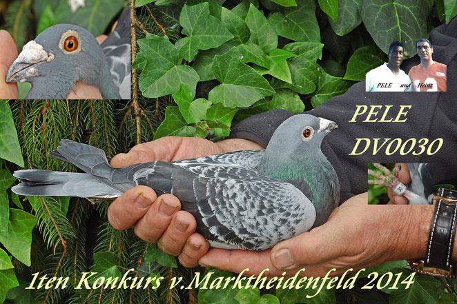 DV o978-11-0030 PELE 1ten Konkurs v.Marktheidenfeld 2014