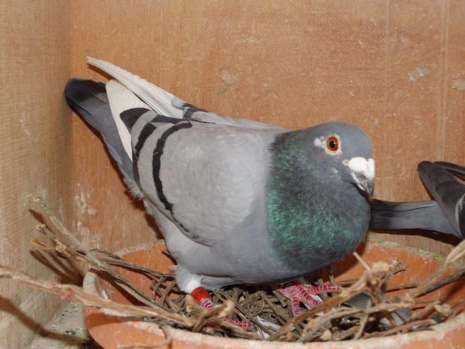National               DV 00128-12-1410 blauscheck Vogel.