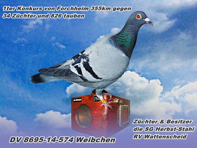 1ter Konkurs von Forchheim 355km gegen 34 Züchter und 826 Tauben
