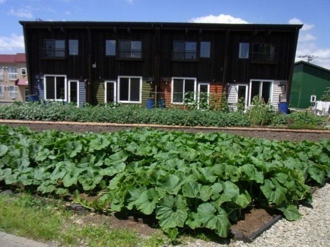 アパートの前の家庭菜園