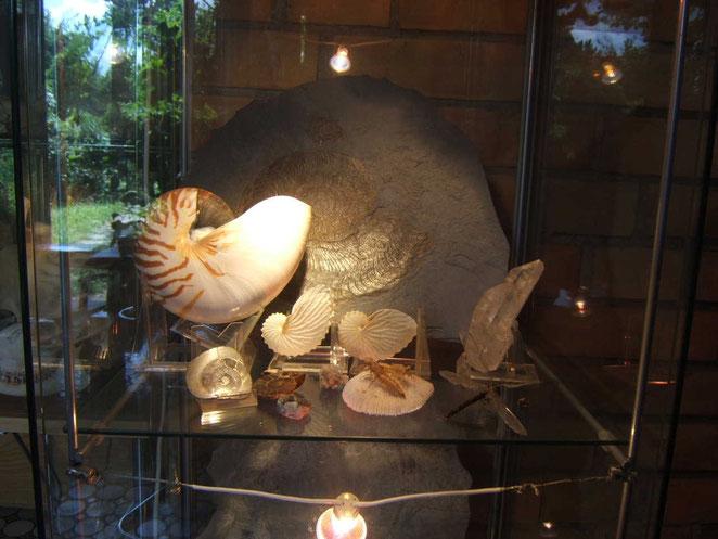 Nautilus - Ammonit - Papierboot - Koralle - Quarz