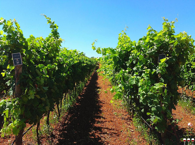 Puglia, Italia. Itinerari di vino. Sud. Foto Blog Etesiaca